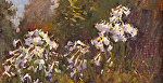 "Quary Rock Lillies - Sonoma by Mark Farina Oil ~ 11"" x 14"""