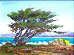"Pacific Grove Coastal Cypress by Mark Farina Oil ~ 9"" x 12"""