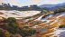 Asilomar Dunes by Mark Farina