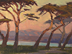 "Lovers' Point Cypress Trees by Mark Farina Oil ~ 9"" x 12"""