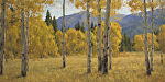 Aspen Meadow by Keith Bond Oil ~ 30 x 60