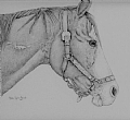 Sugar by Debra Heard Pencil ~ Approximately 8 1/2 inches x Approximately 9 1/2 inches