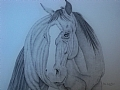 Deigo by Debra Heard Pencil ~  x