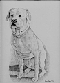 Trapper by Debra Heard Pencil ~ Approximately 15 inches x Approximately 10 inches