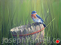 Blue Bird on Weathered Barrel by Joseph Yarnell Acrylic ~ 12 x 16