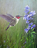 Precision (Ruby-Throated Humming Bird) by Joseph Yarnell Acrylic ~ 12 x 6