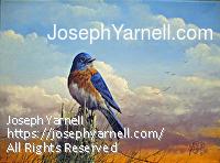 Sharp Landing (Bluebird) by Joseph Yarnell Acrylic ~ 12 x 16