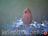 Male Cardinal by Joseph Yarnell Acrylic ~ 11 x 14