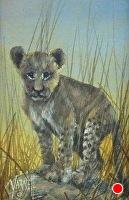 Simba by Joseph Yarnell Acrylic ~ 6 x 4