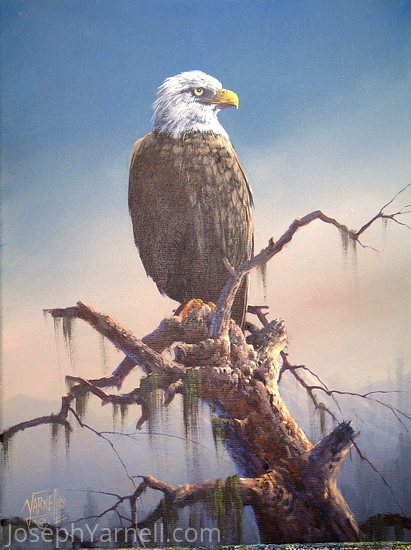 Bald Eagle by Joseph Yarnell Acrylic ~ 16 x 12