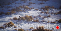 Rabbit Tracks by Joseph Yarnell Acrylic ~ 15 x 30