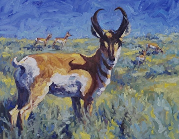 Where Antelope Reign by Sonja Caywood Oil ~ 14 x 18