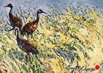 Sandhill Cranes on Pass Creek by Sonja Caywood Oil ~ 11 x 14