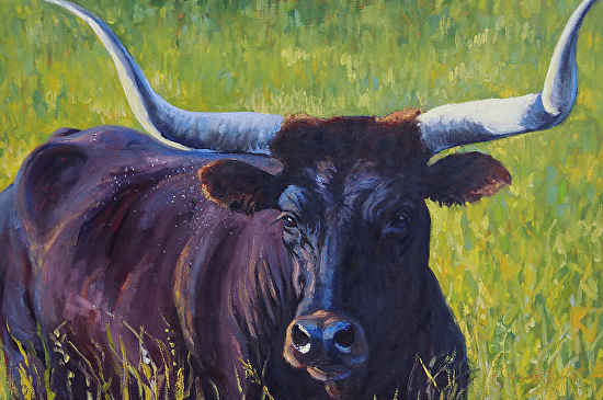 Longhorn Steer - Oil