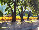 Napa Harvest by  Portola  Art Gallery Watercolor ~  x
