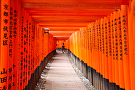 Freyberg_FushimiInariTaisha by  Portola  Art Gallery Photography ~  x