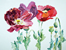 PoppiesRGB by  Portola  Art Gallery Watercolor ~  x
