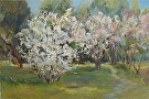 Orchard in Bloom by  Portola  Art Gallery Oil ~ 24 x 36