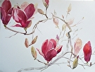 Early Magnolia by  Portola  Art Gallery Watercolor ~ 18 x 22