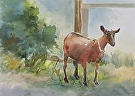 I am Goat by  Portola  Art Gallery Watercolor ~ 17 x 21