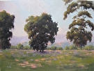 Three Grand Eucalyptus by  Portola  Art Gallery Oil ~ 30 x 40