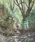 Creek Shadows by  Portola  Art Gallery Oil ~ 18 x 21
