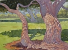 Mitchell Park Tree by Curl by  Portola  Art Gallery Watercolor ~ 16 x 20