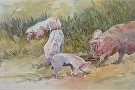 Pigs by  Portola  Art Gallery Watercolor ~ 18 x 24