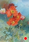 Poppies by  Portola  Art Gallery Watercolor ~ 20 x 16