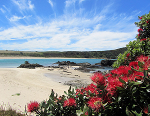 Matai Bay by  Portola  Art Gallery  ~  x