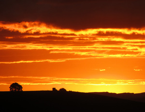 Otorohanga Sunset by  Portola  Art Gallery  ~  x
