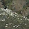 Mountain Flowers, Colorado