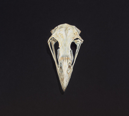 Elsa Johnson Work Zoom Eagle Skull