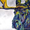Moody Moose