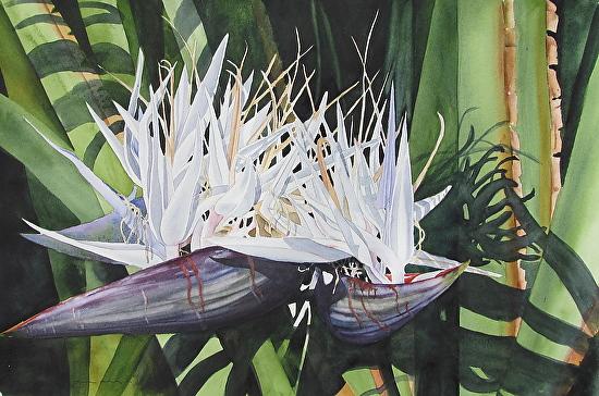 Double White Bird - Watercolor