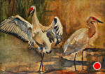 Sandhill Cranes by Lisa Manners Watercolor ~ 10 x 14