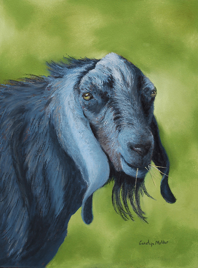 """Billy Goat"" by Carolyn Molder Pastel ~  x"