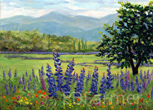 Lupine Field by Elaine Farmer Oil ~ 9 x 12