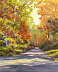 Autumn Path Shadows by Elaine Farmer