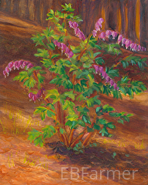 Bleeding Heart by Elaine Farmer Oil ~ 8 x 10