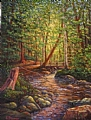 Woodland Stream by Elaine Farmer Oil ~ 12 x 9