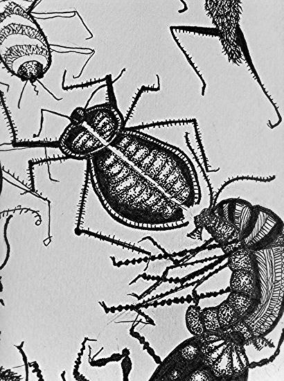 Bugs detail 1 - Under checkerboard frame