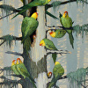 Gone And Forgotten-Carolina Parakeets