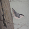 "Nuthatch by Susan Parmenter Oil ~ 7"" x 5"""