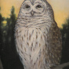 "Barred Owl by Susan Parmenter Oil ~ 8"" x 6"""