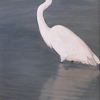 "Egret by Susan Parmenter Oil ~ 24"" x 12"""