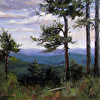 Pines of the Mogollon Rim