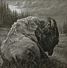 Buffalo Moon by Charles Ewing Giclee Print on Canvas ~ 26 x 26