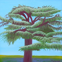 "Cedar of Lebanon by Mary Murphy Oil ~ 20"" x 20"""