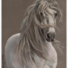 The Lipizzan's Mane